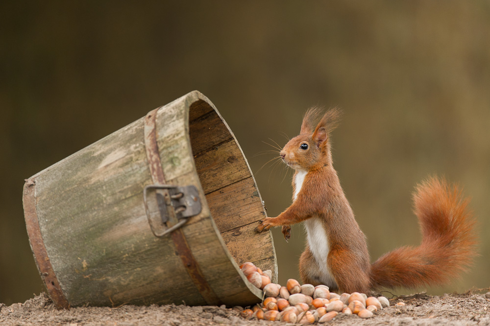 Red squirrel hits the jackpot